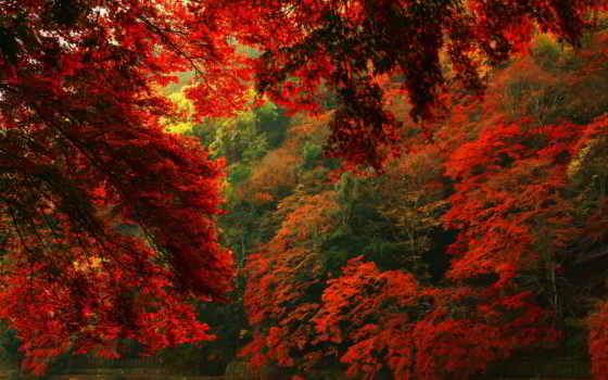 red, лес, осень, free, desktop, фон,