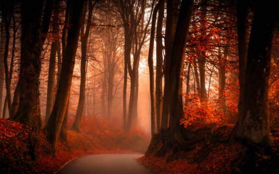 осень, лес, листва, desktop, природа, high, resolutions,
