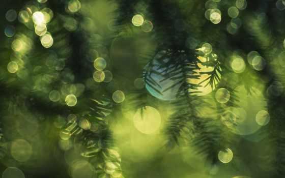 природа, высокого, бесплатные, разрешения, елки, goal, елка,