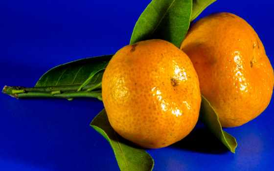 плод, free, оранжевый, цитрус, фото, pixabay, fruits, изображение, mandarin,