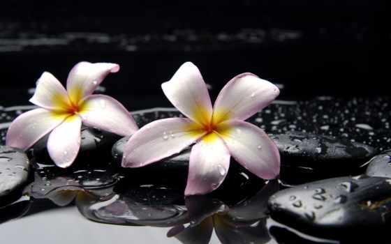 орхидея, орхидеи, камни, black, желтые, cvety, water, цветы, макро, orchids, широкоформатные,