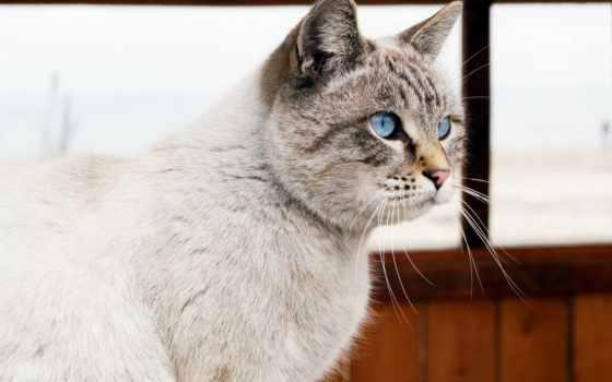 ipad, кот, мини, взгляд, air, android, кошки,