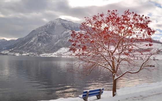 зима, дерево