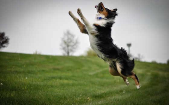 прыжок, собака, снег
