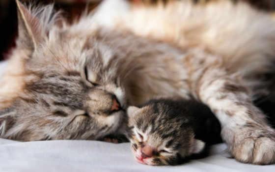спать, кот, мама
