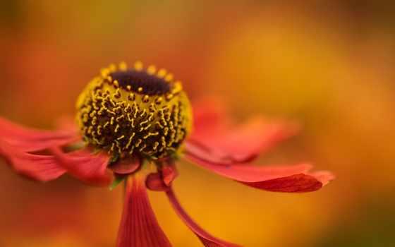 photos, rupinder, khural, интересно, самый, flickriver, насекомое, flickr, favorites,