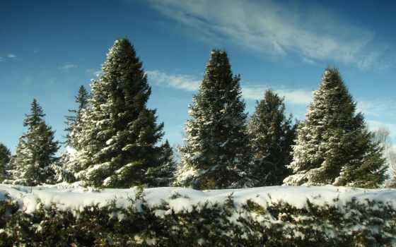 елки, winter, снег, лес, trees, eli, природа, new, год, снегу, небо,