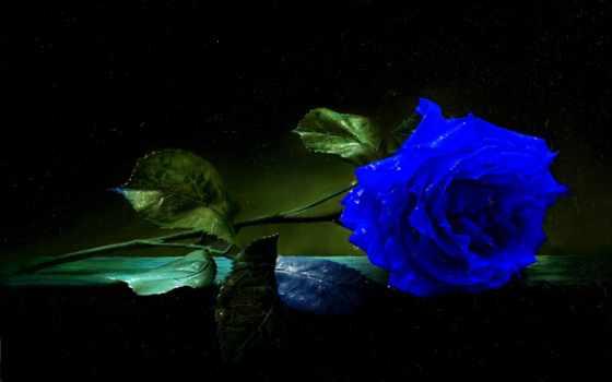 mavi, gül, resimleri, güzel, resim,