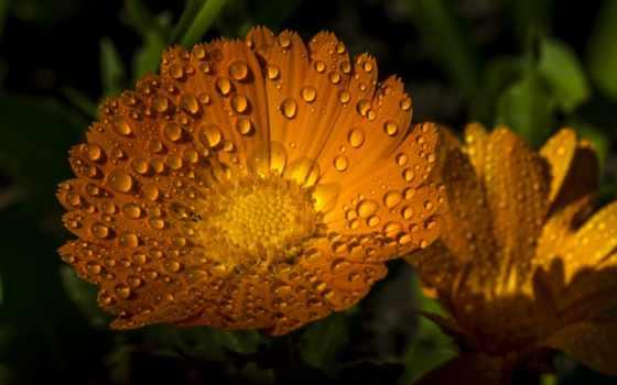 cvety, макро, flickr
