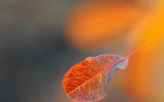 leaf, desktop,