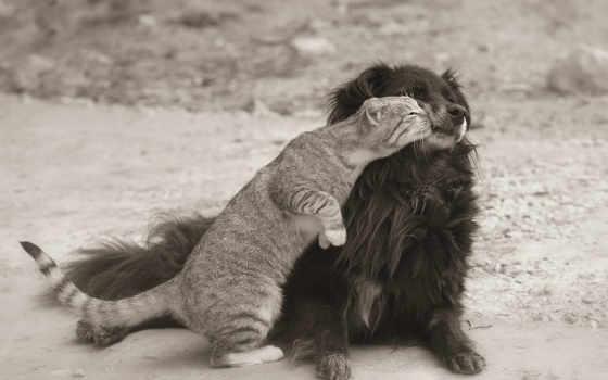 кошки, собаки, фотографий, белые, чёрно, уже, загружено, друг, коллекция, лучшая,