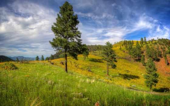 дерево, трава, android, склон, небо, hill, планшетный