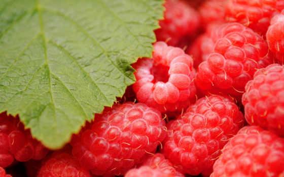 малина, ягода, red, макро, лист, плод, зелёный