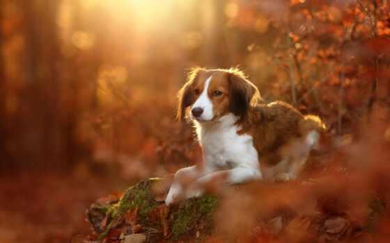 собака, коллекция, фон, permission, листва, смотреть, user, осень