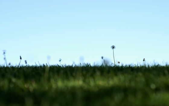 природа, поле