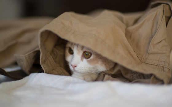 кот, torode, benjamin, котенок, hannah, kot, нояб,