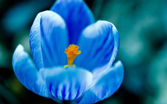 blue, color, цветочек, yellow, цветка, нежность, цветотерапия,