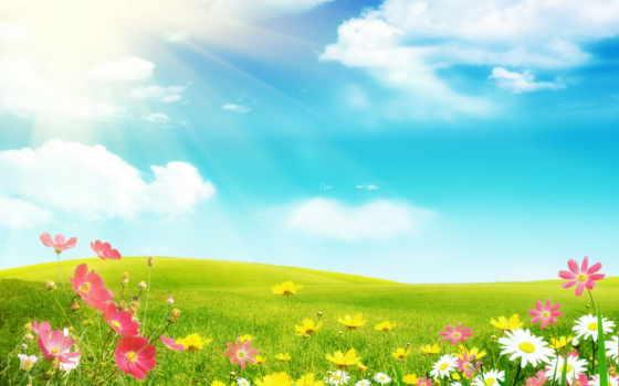 summer, ромашки, поле, цветы, космеи, солнечные, rays,
