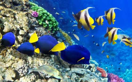 coral, риф, world