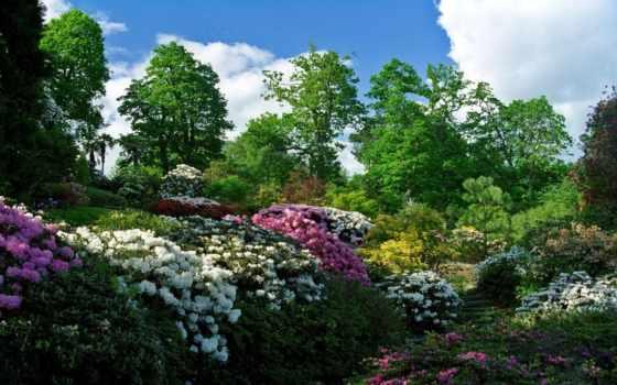 nice, desktop, природа, natural, ideas, viagra, garden, фон, sale,