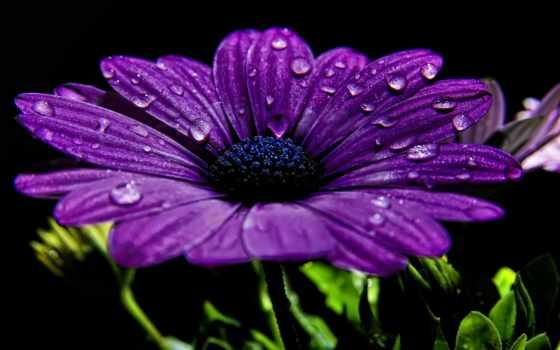 телефон, cvety, квіти, скачати, картинку, безкоштовно, растения, рослини, бесплатные, фотошпалери,