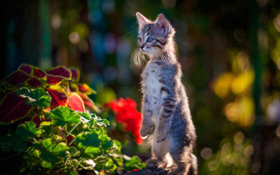 красивый, кот, animal, котенок, фото