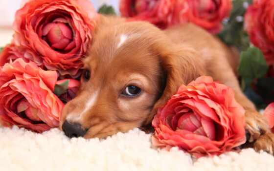 собака, цветы, animal, cvety, хороший, narrow, love, wild, скучать