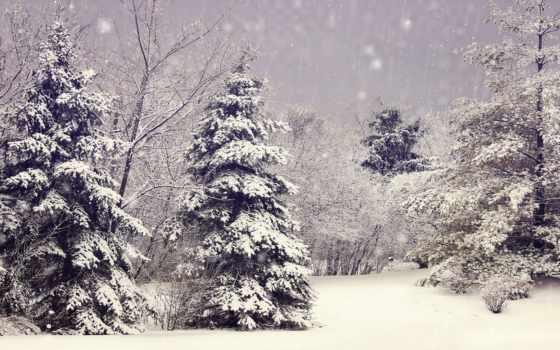 елки, winter, снег, лес, природа, ветки, trees,