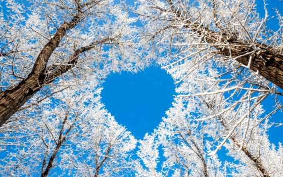 winter, сердце, снег, trees, зимнее, природа, небо, об,