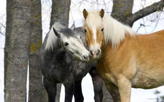 caballos, imagenes, fotografias