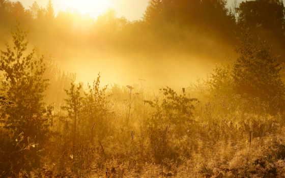 природа, лес, trees, категория, теги, осень,