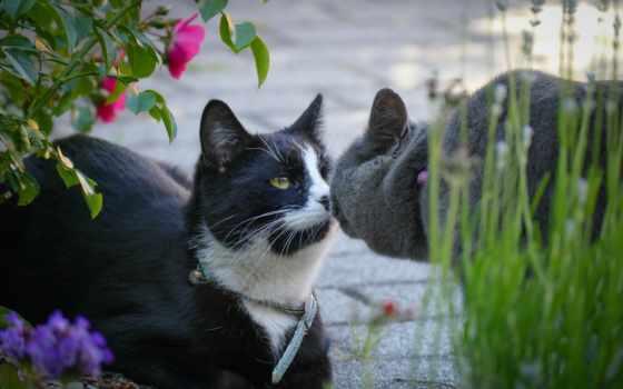 кот, картинка, tags, смотреть, short,
