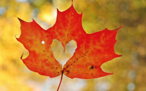 осень, лист, maple, макро, сердце,