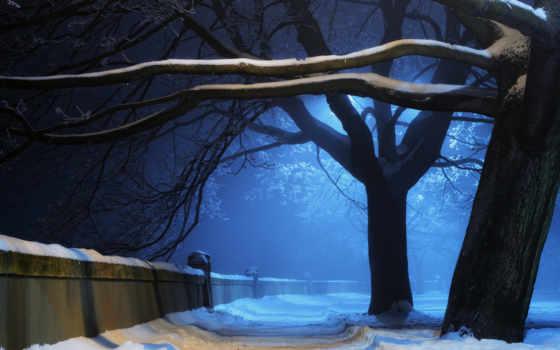 ночь, winter, деревя
