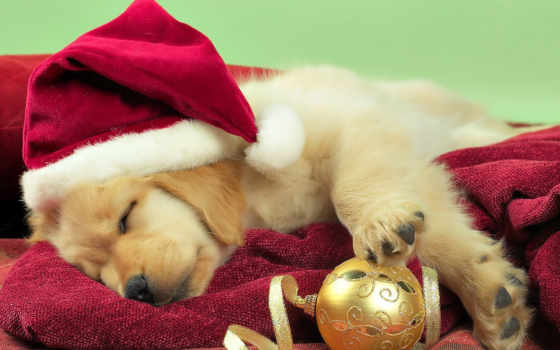 christmas, собака, tumblr