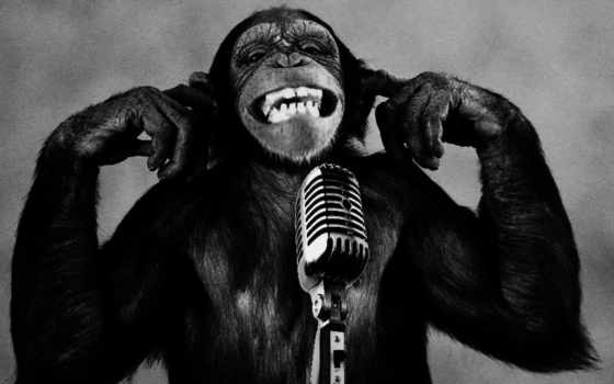 funny, обезьяна, микрофон,
