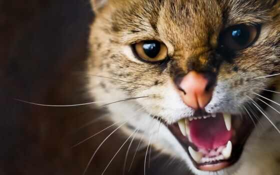 кот, дикая, сервал Фон № 113811 разрешение 1920x1080