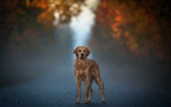photos, собаки, flickr