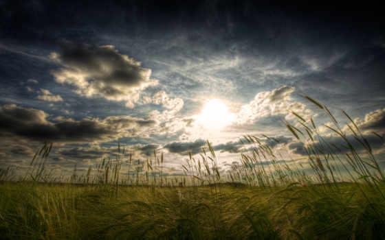 природа, поле, windows, трава, небо, oblaka, пшеницы, колосья, страница,