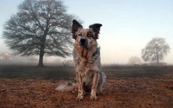 природа, янв, obrázky, zhivotnye, поле, tapeta, собака, ever, pozadia,