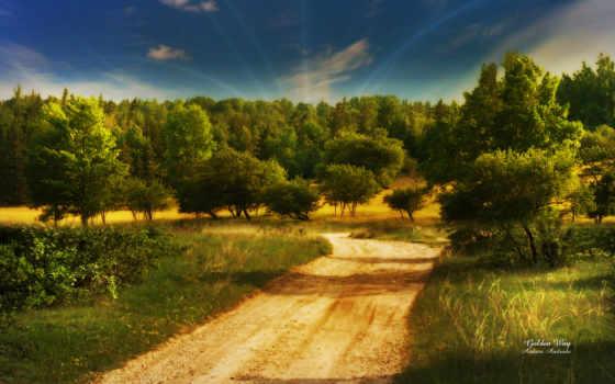 золотистый, путь, картинка, land, зелёный, fairyland, high, фото, forests,