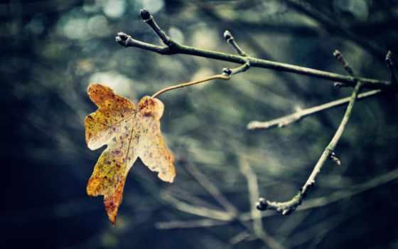 leaf, последний, осень, они, desktop, макро, laplace, branch, лист,