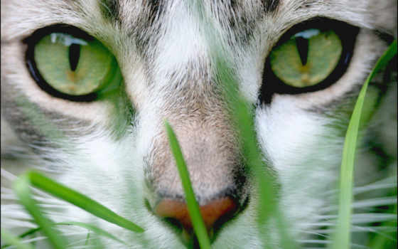 wallpaper, and, is, cat, animals, grass, can,
