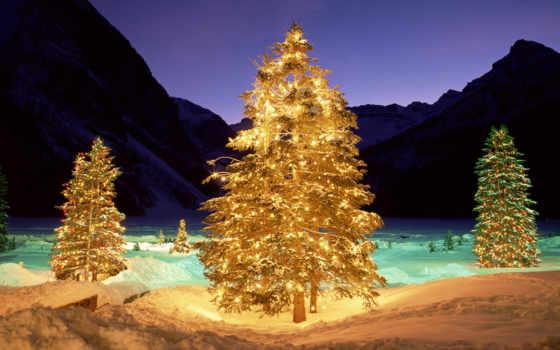 дерево, подсветка, снег