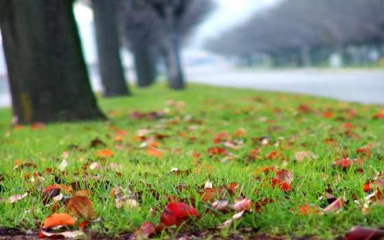листья, осень, трава