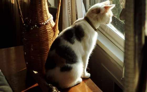очень, окна, жилище, задолго, человека, уже, за, совершенно, однако, красоту, свет,
