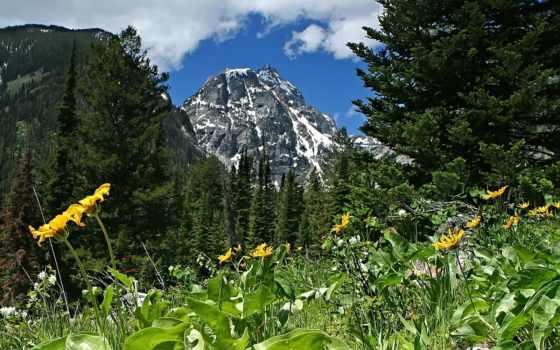 горы, пейзажи, цветы