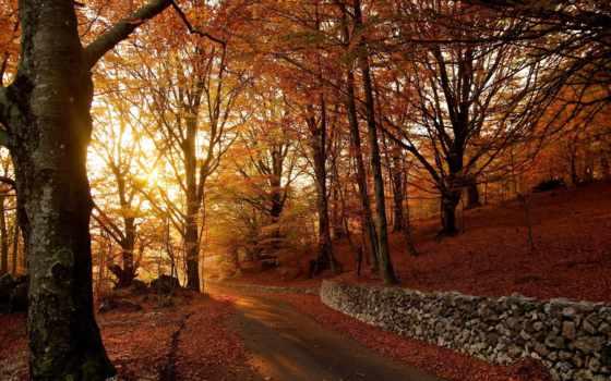 automne, осень, des, gros, photos, лес, ест, sun,