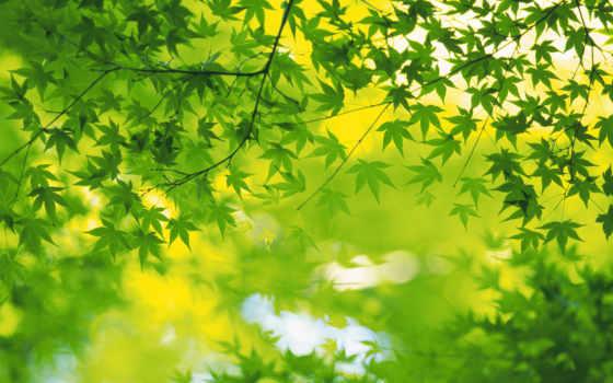зелёный, зеленые, листва, увеличивается, весна, обложки, листья,