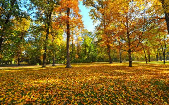осень, желтые, осенние, magda, divar, masa, şəkillər, листва, цитатник,